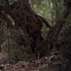NIKKOR 85mm f1.4で森が撮れた