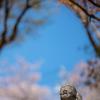 桜が終わっちまった:五百羅漢