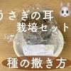 うさぎの耳栽培セットの種まき。土の熱湯消毒からラップかけまで♪
