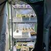 【初心者向け】グロウボックスで食虫植物を室内栽培する!