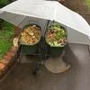 長雨の影響で多肉植物が大変!!