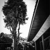 【#107】古民家の守り木
