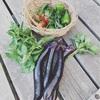 【畑のある暮らし】野菜が高騰 自家製野菜で豊かな食卓に