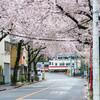 北千住の桜の名所・大踏切前の桜並木を散歩してきました