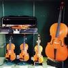 弦楽器ショーケースの商品が入れ替わりました!