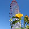 【お花見21】葛西臨海公園の花壇とひまわり【サイクリングコース7】水元公園 沿い