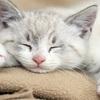 振り返りブログ 睡眠健康週間