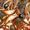 黒大豆の種がはじけ飛ぶ