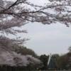 2019町田さくらまつり 開催情報 その2