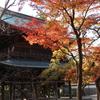 紅葉がみたい!鎌倉散歩【円覚寺】