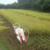 稲刈り、スタート。