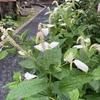 加賀の旅「懐かしい匂い」