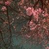 河内長野のエステ さぁ、四月です!