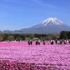 『色散歩/桜色の平原』富士 芝桜まつり