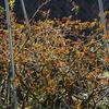 今日から暖かくなっていくらしい。春風、つるアイスバーグの若葉が眩しく輝く