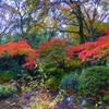 【日記】近くの神社へ散歩 紅葉とポケモンとお守りと