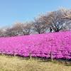 東京の桜(ソメイヨシノ)はそろそろ終わり🌸。この時期の出来事をまとめて報告します。