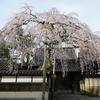 慶恩寺のしだれ桜