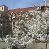 チュウリッヒ&アウグスブルグ 春の陽ざし 桜満開