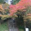 雷山の紅葉 なぜ楓の葉は赤くなるのか