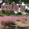 済州島(チェジュ島)フォトスポット #ピンクミューリーの咲く「ノリメ公園」