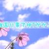 【ユニクロ】幼稚園行事で神T(Uniqlo U クルーネックT)がかぶる