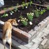 花壇づくり その3