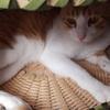 ⑫のら猫えんちゃんばんちゃん日記