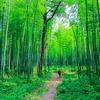 悟りの本質に近づく、仏教の絶対読みたい必読本おすすめ6冊。