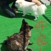 甲斐犬サンのお風呂事情〜オフロイッテクル (・∀・ノノ○0o。ゴシゴシ!