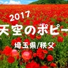 【秩父観光2017】花さんぽ!「天空のポピー」今年は開花が遅かったので少し大変でした