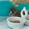 怖がるスズメ、怖いもの知らずなネコ
