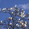 春の手賀沼遊歩道の花々と手賀沼公園の鳥たち