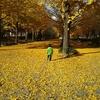 秋晴れの日に紅葉の中で息子の成長を思う