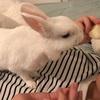 我が家のお昼寝と洋梨を食す先生