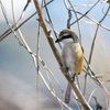 アフターも楽しい多摩川探鳥会!
