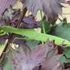 畑の昆虫2