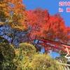 第2週〜今週のお話×3〜「高尾山に行ったよ」他