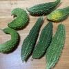 ゴーヤー植え付け後約2ヶ月で14本収穫しました