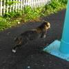 4月後半の #ねこ #cat #猫 その1