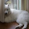 大型犬は怖いワン