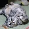 カリカリ(ドライフード)も味変してあげると猫がすごい喜ぶ。おすすめ!