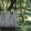 県民の森展望台~温室ハウス(茨城県立植物園2)