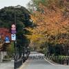 遅っ!令和元年12月の東京都心紅葉情報