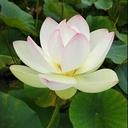私とのつながり横とつながり  天地を結ぶ❇ Lulu Lotus