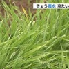 二十四節気「雨水」でも最高気温は熊本市で8度4分