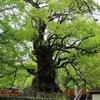 蒲生の大クス 幹周り24.22m.日本最大だ.樹齢1500年.高さ30m.内部は,8畳ほどの空間が,ビル4階分の高さまで.幹は,ほぼ全身が,別の植物で覆われていた.この木を中心に神社ができ,人が住み,町ができたという.「まだ私たち,何十年なんで,まだまだ頑張れるなって,勝手に」「この中に入って隠れたりとか,ちょっと思春期の頃とかに,一人で,よく考え事とかやってました(笑い)」