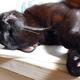 今日の黒猫モモ&白黒猫ナナの動画789