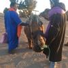 サハラ砂漠でラクダに振り落とされそうになった話。