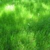 緑濃き約束の場所